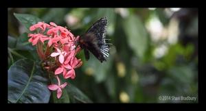 B_Butterfly_01