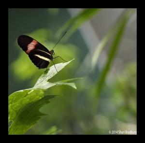 B_Butterfly_02