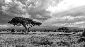 https://pixabay.com/en/africa-kenya-landscape-nature-283868/