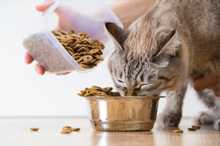 cat-feeding-advice Webbox website