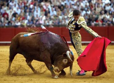 Bull and matador