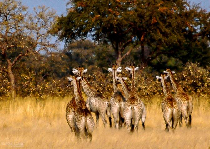 Wildlife Photograph, Nature, Nikon, Africa, Animals,