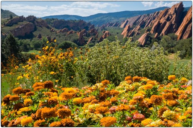 flowers, red rocks, colorado