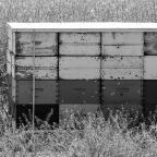 """June 2021 – Picture Colour """"Black & White"""""""